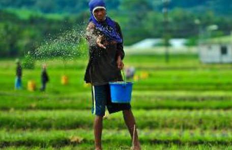 Berita Nasional Lahan Pertanian Indonesia Masih Kalah Jauh Dengan