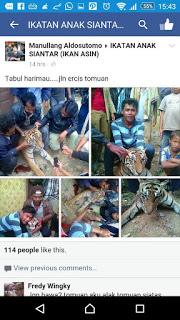 SS pembunuh harimau