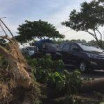 Akses Jalan Di Suramadu Macet Total Karena Banyak Pohon Tumbang